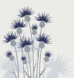 Thistles in the meadow Royalty Free Stock Images