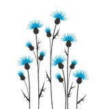 Thistles. Silhouette on a white background Royalty Free Stock Image