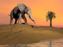 Thisty elephant Royalty Free Stock Image