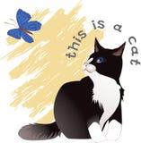 thit кота Стоковые Изображения