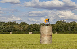 Hay Bales During Le Tour de France Royalty Free Stock Images