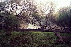 Thol湖 免版税库存图片