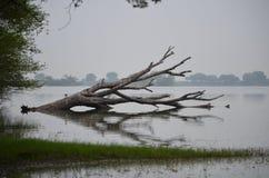 Tholvogelreservaat Stock Afbeelding