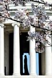 Thomas Jefferson που πλαισιώνεται από τα άνθη κερασιών στοκ εικόνα