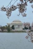 Thomas Jefferson Memorial Through Cherry Blossom Branches Stock Photos