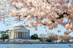 Thomas Jefferson Memorial during Cherry Blossom Festival in spri Royalty Free Stock Images