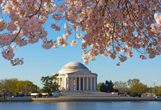 Thomas Jefferson Memorial at dawn during cherry blossom festival. Royalty Free Stock Image