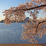 Thomas Jefferson Memorial at dawn during cherry blossom festival. Stock Image