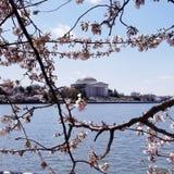 Thomas Jefferson Memorial royalty free stock photos