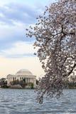 Thomas Jefferson Memorial durante Cherry Blossom Festival no spri imagens de stock