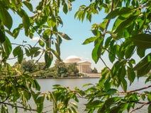 Thomas Jefferson Memorial enmarcó por las hojas fotografía de archivo libre de regalías
