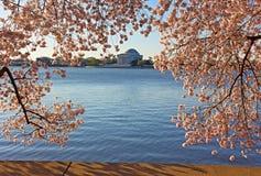 Thomas Jefferson Memorial framed in cherry flowers at Tidal Basin in Washington DC. Stock Photo