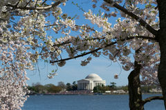 Thomas Jefferson Memorial framed with flowers royalty free stock images