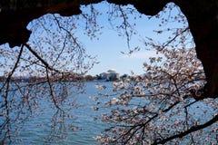 Thomas Jefferson Memorial in primavera Immagini Stock