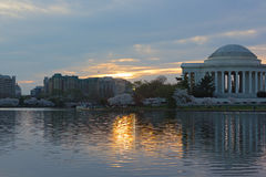 Thomas Jefferson Memorial at sunrise during cherry blossom festival in Washington DC, USA. Royalty Free Stock Photos