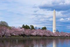 Thomas Jefferson Memorial tijdens Cherry Blossom Festival bij het getijbekken, Washington DC royalty-vrije stock afbeelding