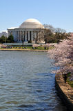 Thomas Jefferson Memorial während Cherry Blossom Festivals Stockbild
