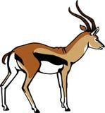 Thompson Gazelle Fotografia Stock Libera da Diritti