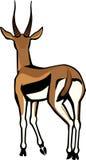 Thompson Gazelle Immagini Stock