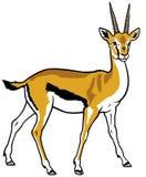 Thomson gazelle Arkivbilder
