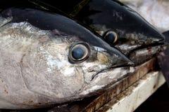 Thon de truite saumonnée Images stock
