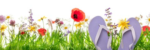 Thongs or Flip-Flops in front of a flower meadow, white backgrou. Nd, concept holiday and vacation in the nature Stock Photography