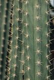 Thorn of cactus leaf background. Detail Thorn of cactus leaf background stock image