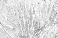 Thorn concrete wall texture Royalty Free Stock Image