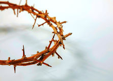 Thorn crown  close up Stock Photo