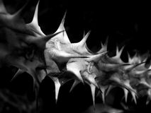 Thorn in the dark Stock Photography
