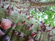 Thorn tree bark Stock Photos