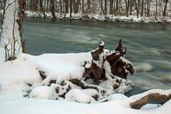 Thornapple flod Royaltyfri Foto