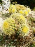 Thorned växter Fotografering för Bildbyråer