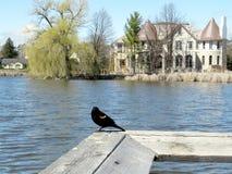 Thornhill der Teich 2017 Lizenzfreies Stockbild
