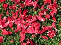 Thornhill kronblad av blommor 2017 Fotografering för Bildbyråer