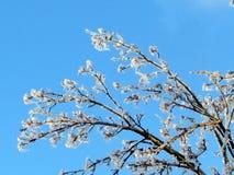 Thornhill los árboles cubiertos con el hielo 2013 Foto de archivo libre de regalías