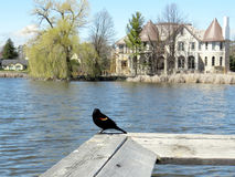Thornhill the pond 2017. The Oakbank Pond in Thornhill, Canada, April 17, 2017 Royalty Free Stock Image