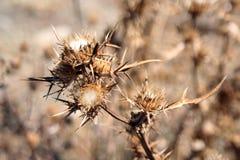 Thorns Royalty Free Stock Photos