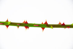 Thorns Royalty Free Stock Photos