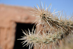 Thorns. Impressive thorns of desert plant in front of housing stock photography