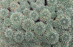Thorns. Image of a garden full of cactus plants Stock Photos