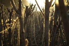 Free Thorns Stock Image - 3262751