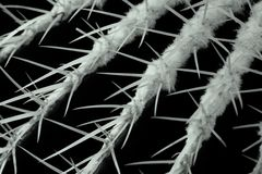 Free Thorns Royalty Free Stock Photography - 365517
