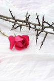 Thorns against white fabric and red rose petals, Christian background Royalty Free Stock Photography