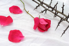 Thorns against white fabric and red rose petals, Christian background Stock Photography