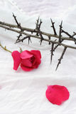 Thorns against white fabric and red rose petals, Christian background Stock Photos