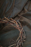 Thorns on leather Royalty Free Stock Image