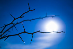 Thorns over blue sky Stock Image