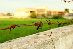 Thorns sharp wire Royalty Free Stock Images