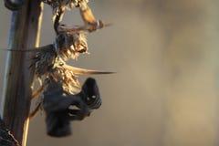Thorns on tumbleweed plant Stock Image